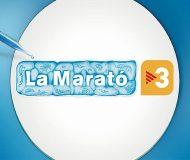 marato web